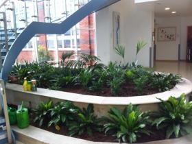 Indoor planting - St. James Hospital