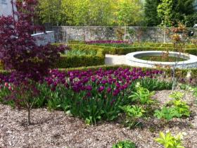 Spring garden planting tulips