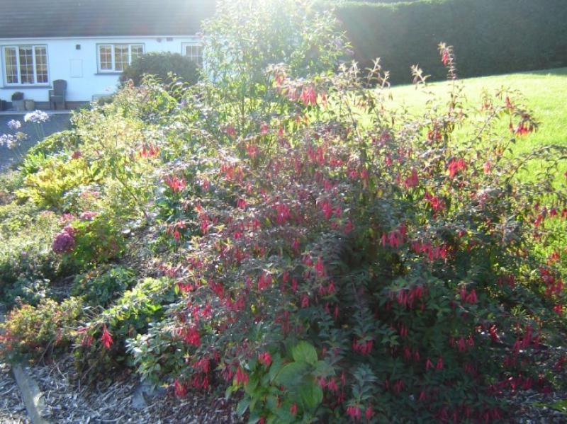 Landscape gardening hillside garden wexford