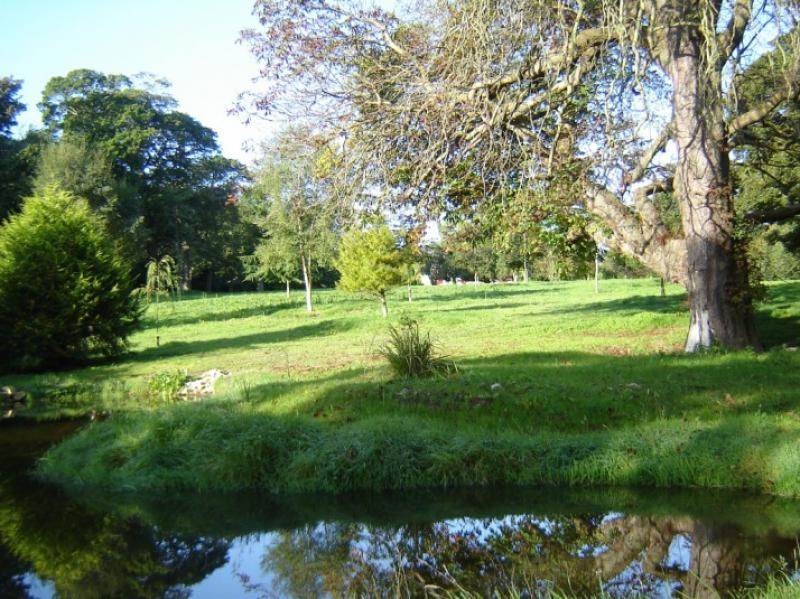 Large Pond Landscaping Project Wicklow