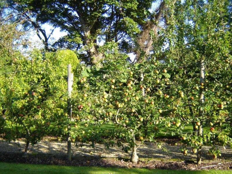 Landscape Maintenance Fruit Garden Wicklow
