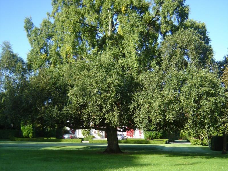 Large Estate Gardens Maintenance Wicklow