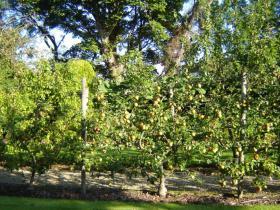 Landscape Maintenance Fruit Garden Wicklow